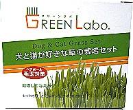 Green LOBO DIY燕麥草